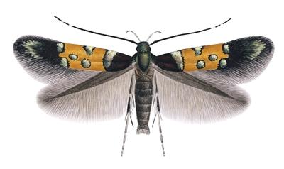 Motyli V Kresbe A Fotografii Ustav Zoologie Rybarstvi
